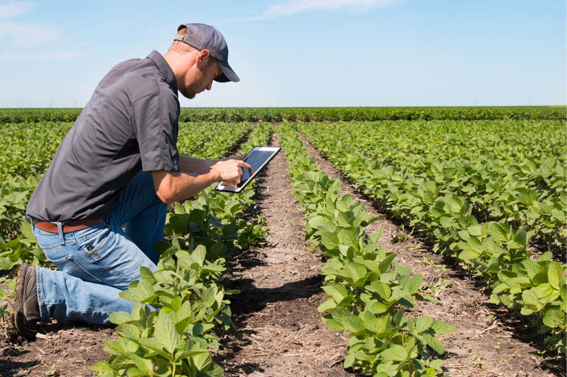 Farmer using advanced technology to monitor crops