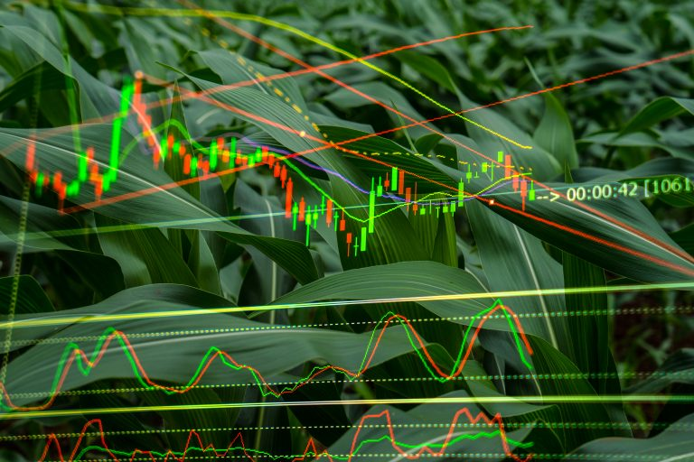 Financial data overlaid onto an image of corn crops