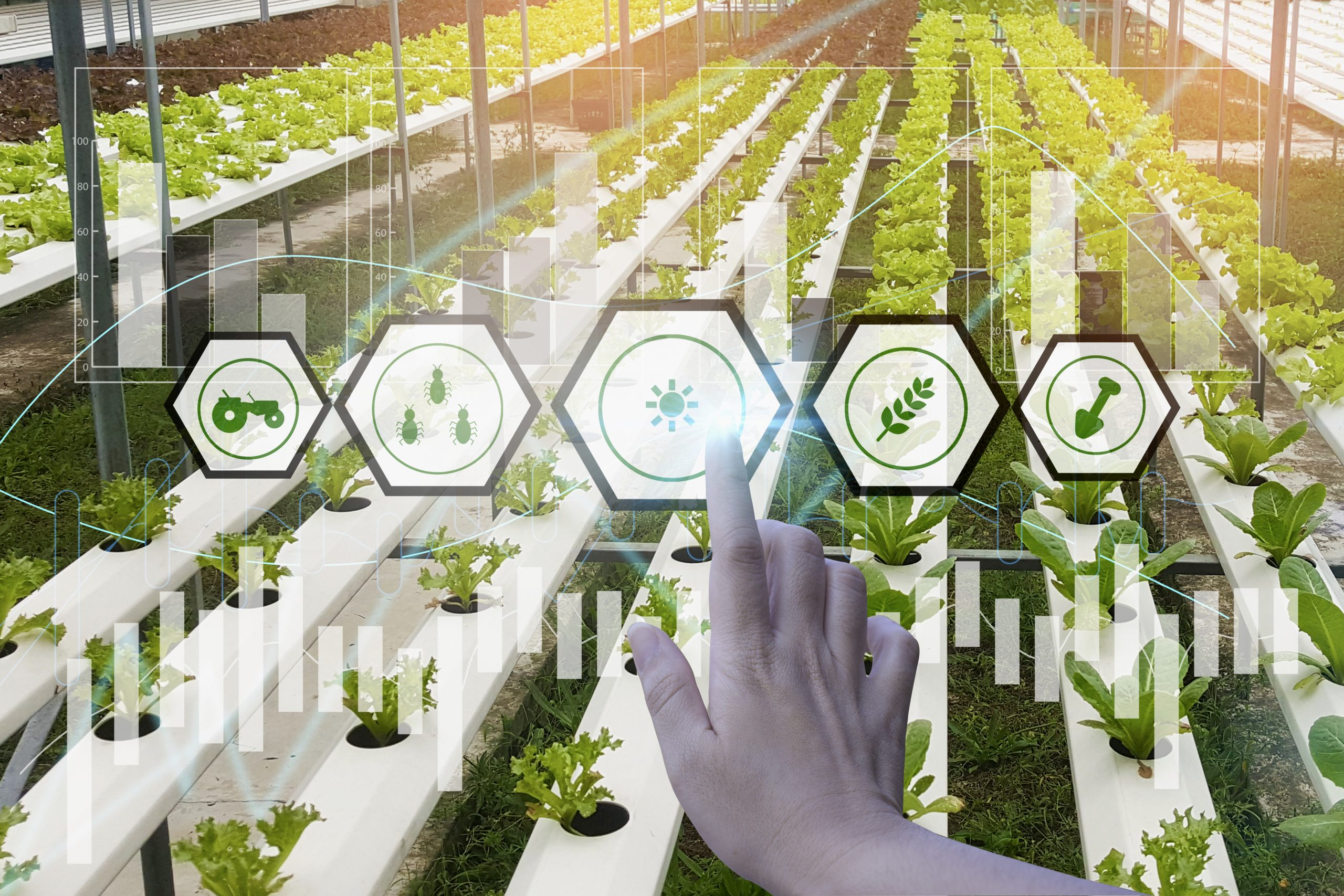 Human hand touches a symbol representing light in a vertical farm.