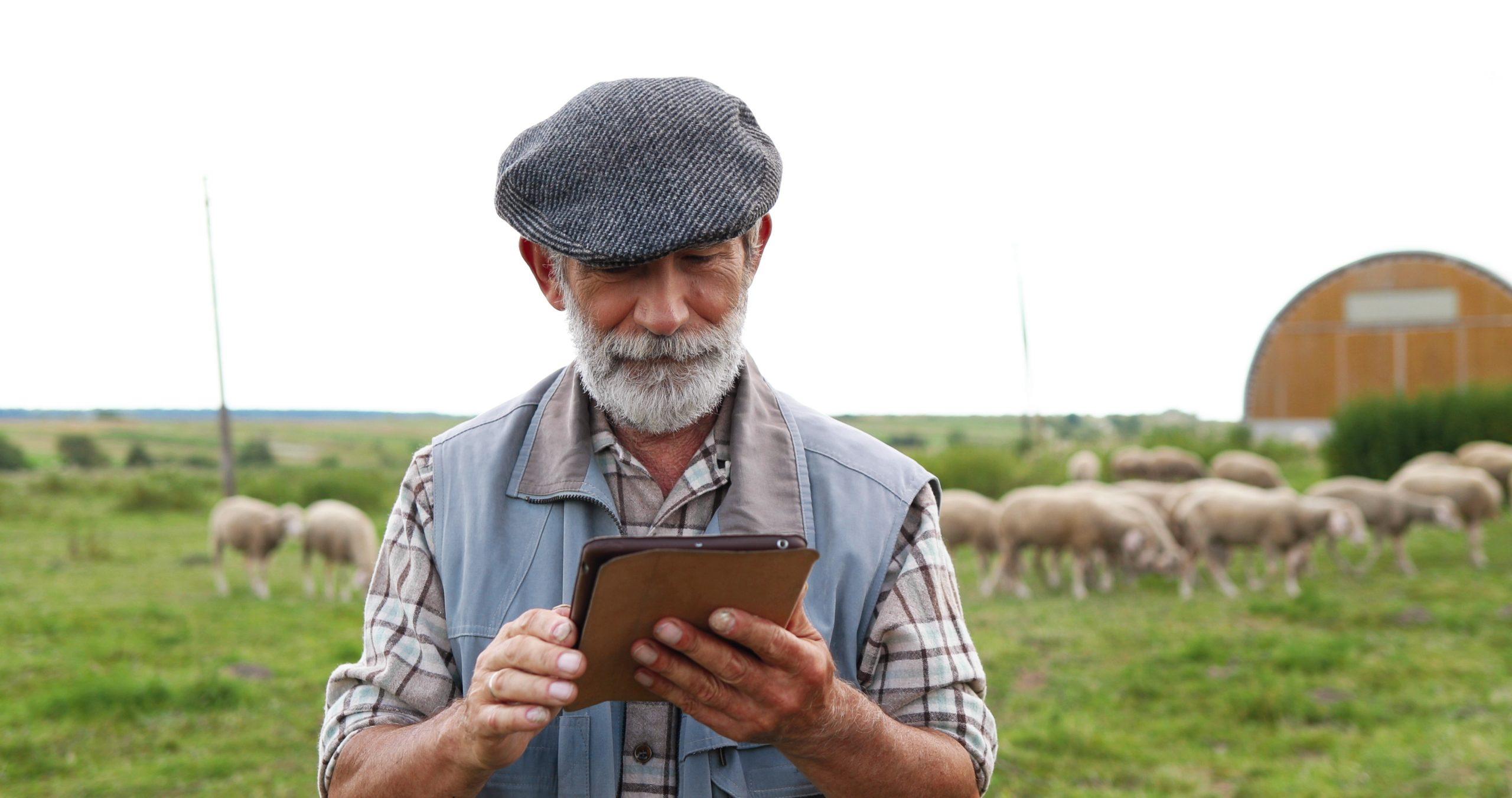 Farmer using iPad technology in a field of sheep