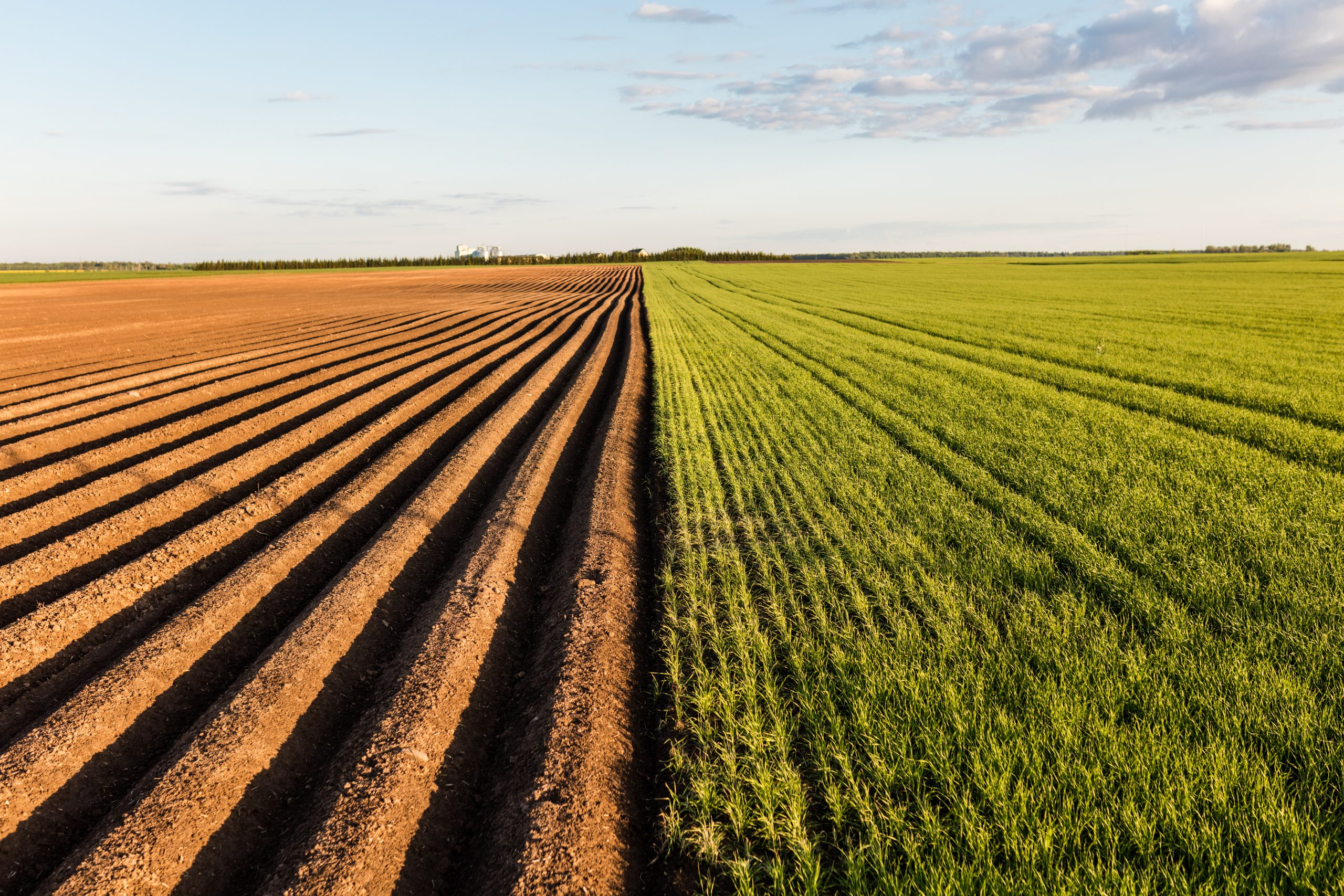 The boundary of an arable field.