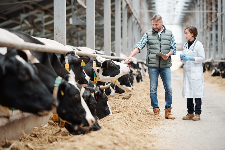 Farmer and vet discussing animal health on a dairy farm.